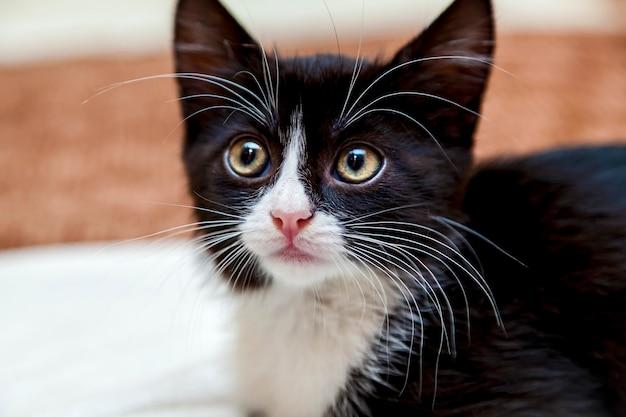 Черно-белый котенок с забавной мордочкой и большими белыми усами и бровями