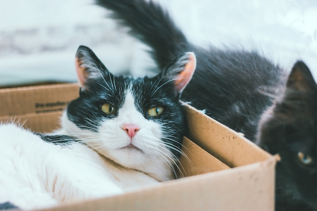 Черно-белый старый кот спит, лежа в картонной коробке для поделок в доме