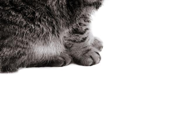 흑백 사진 처리. 흰색 배경에 앉아있는 동안 부드러운 고양이 발의 세부 샷