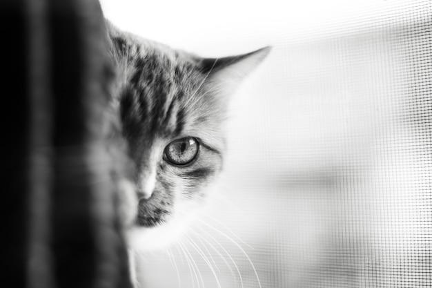 猫の半分の顔の黒と白の肖像画。