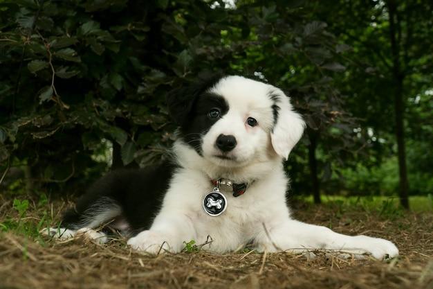 공원에서 처음으로 잔디를 느끼는 흑인과 백인 강아지