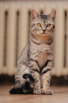 オレンジ色の目を持つ黒と白のぶち猫。