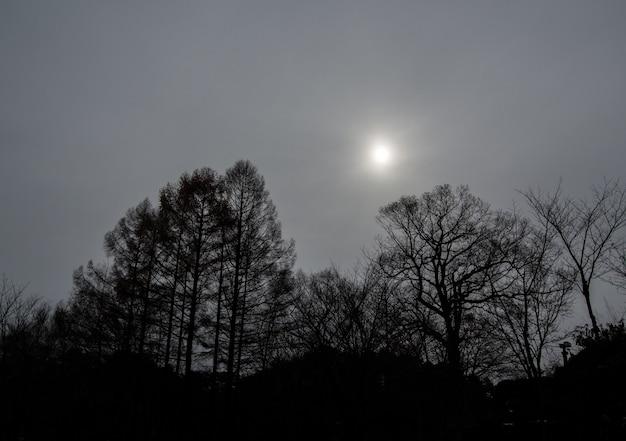 黒と白のトーン - 太陽と秋の木々