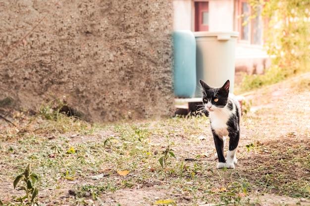 庭で何か面白いものを見ている黄色い目を持つ黒と白のタキシード猫