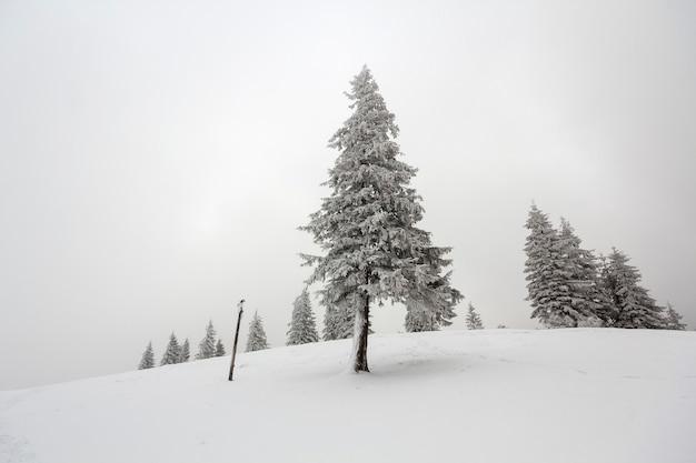 黒と白の冬の山の新年のクリスマスの風景。白い空と地平線上の黒い森のコピースペースの背景に深い澄んだ雪の中で霜で覆われた一人で孤立した背の高いモミの木。