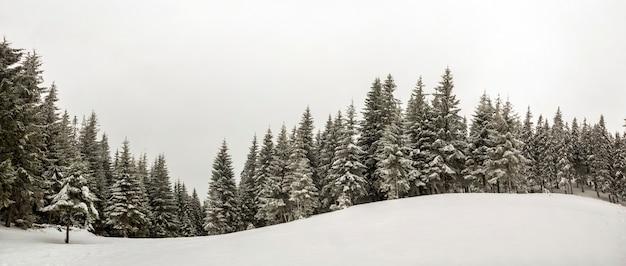 黒と白の冬の山の新年のクリスマスの風景。冬の森の深い澄んだ雪の中で霜に覆われた背の高い松の木。