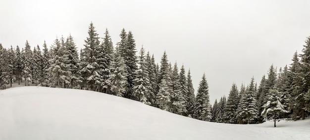 Черно-белая гора зимы новый год рождественский пейзаж. высокие сосны, покрытые инеем в глубоком ясном снегу в зимнем лесу.