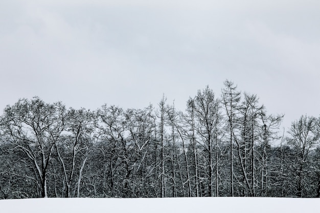 黒と白の冬の雪ヨーロッパの森の風景。どんよりした空。冬時間。
