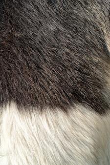 山羊の黒と白の羊毛。ペットの毛皮の質感。