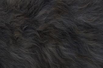 Black animal hair