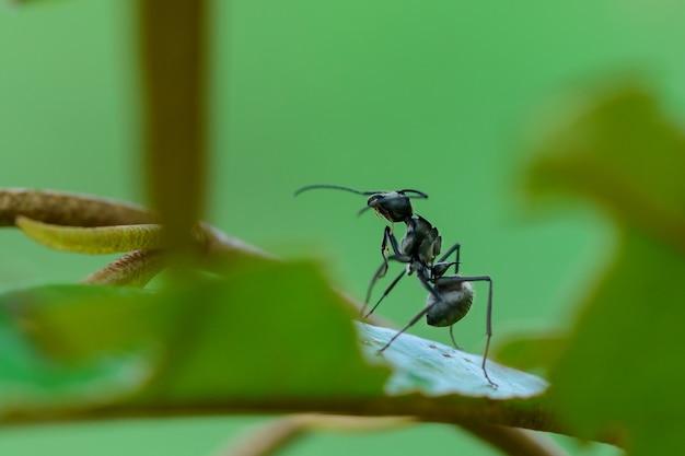 나무에 검은 개미