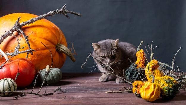 Черный фон с тыквами на хэллоуин