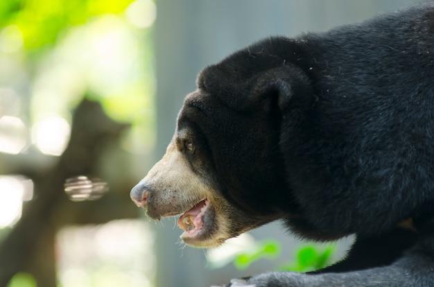 タイで開かれた動物園の黒い熊