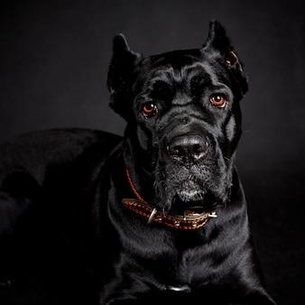Черная большая собака.