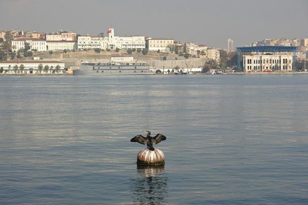 Black bird on a buoy