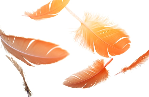 Перья черной птицы, плавающие в воздухе на белом фоне, летающие перья