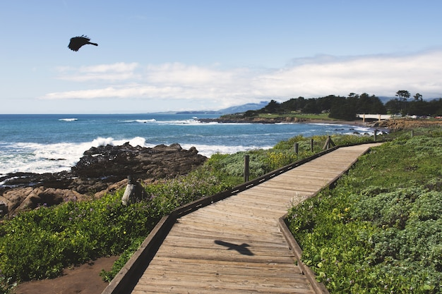 Black bird flying over the ocean near a wooden pathway during daytime