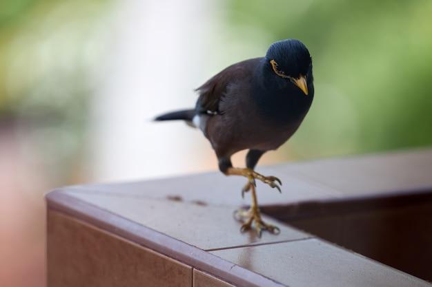黒い鳥はバルコニーの手すりに行きます