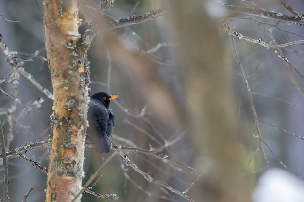 木の枝に座っている黒い鳥