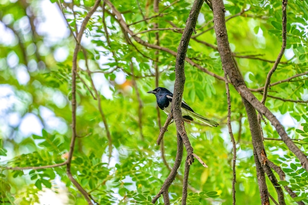 Black bird with white line on its wing hangs on to a tree branch, green background.