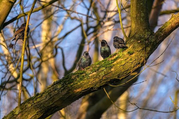 Uccelli neri seduti uno accanto all'altro su un albero