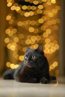 黒ボンベイ猫ネコ