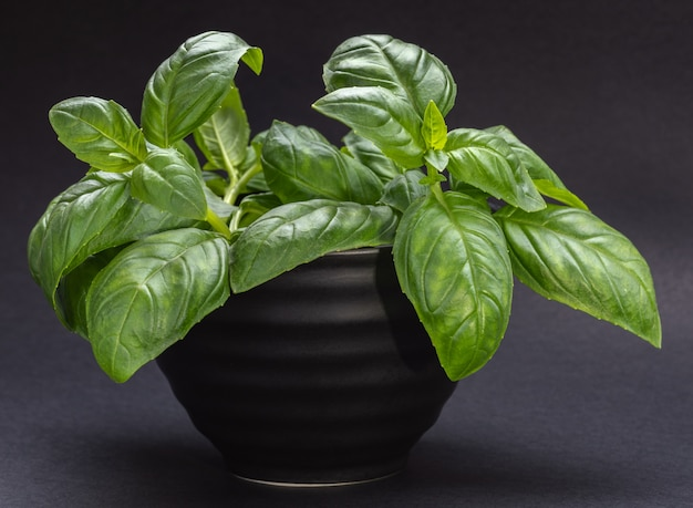 Black bowl with green basil leaves
