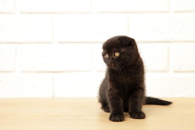 白い背景に黒のブリティッシュショートヘアの子猫。上面図