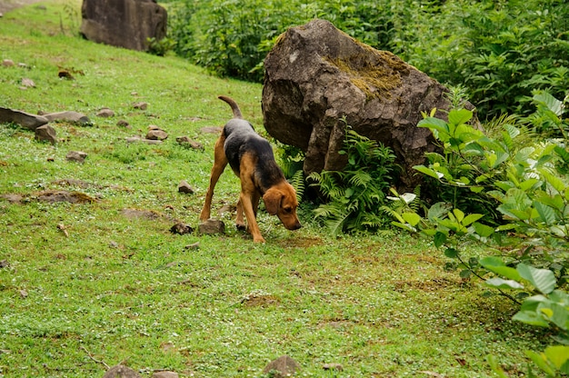 Black and brown puppy plays in the forest
