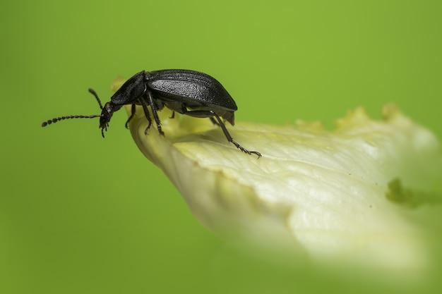 Black bug sitting on leaf close up