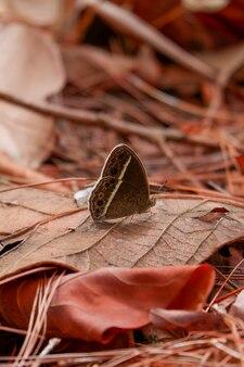 Черная бабочка на коричневом сухом листе
