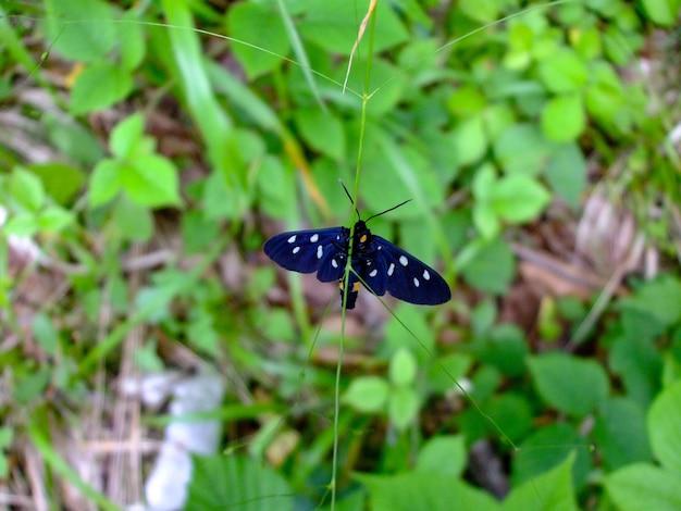 Черная бабочка над зеленой травой и растениями