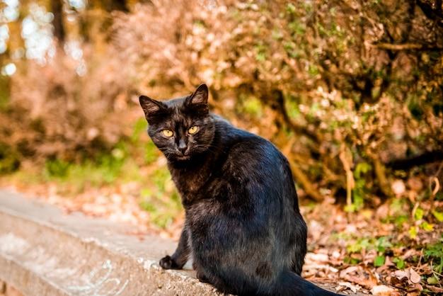 Черная кошка и осень портрет питомца среди желтых листьев