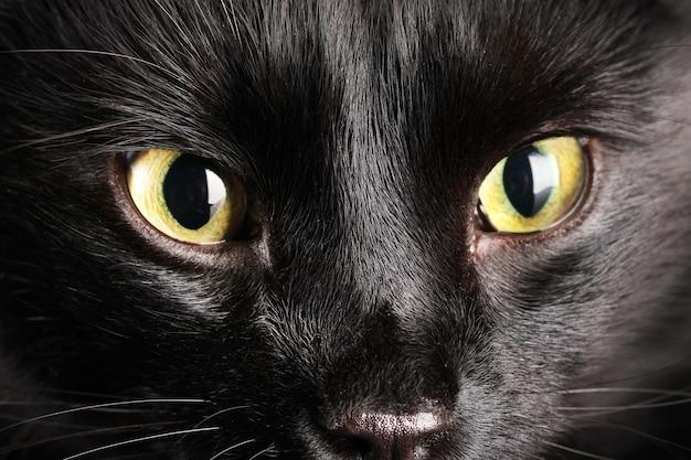 黒猫、クローズアップ