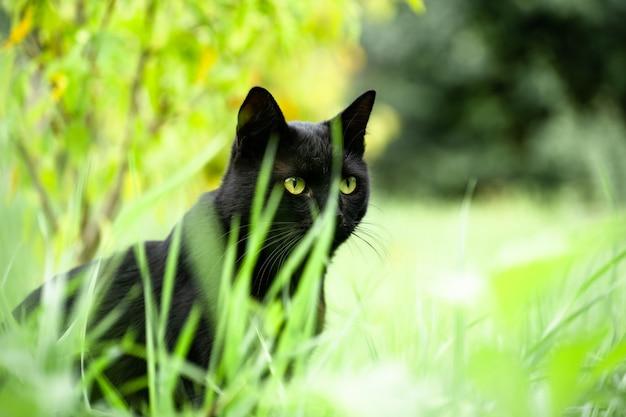 Black cat hiding in the grass