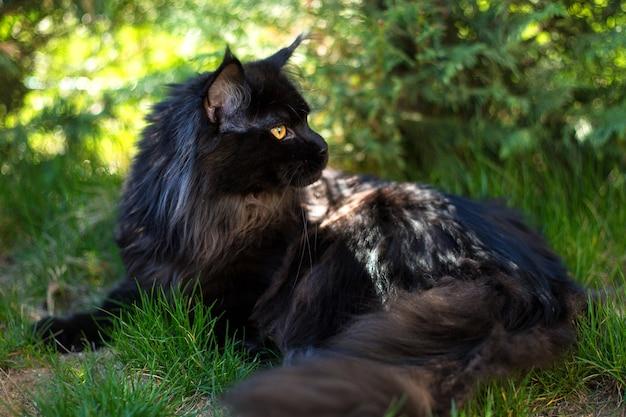 풀밭에 검은 고양이