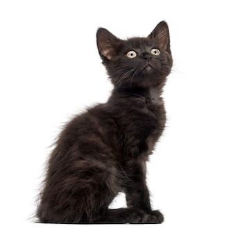 Черная кошка, изолированные на белом фоне