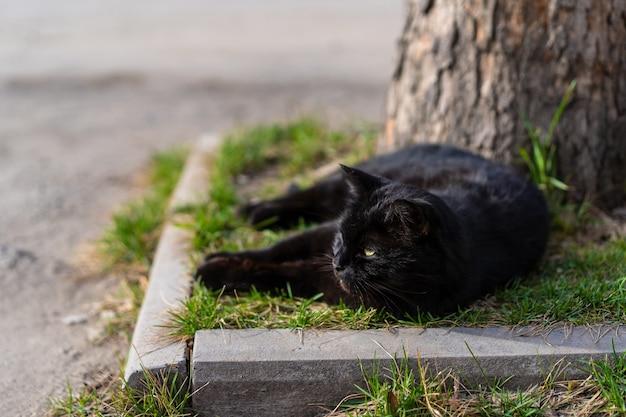 黒い猫は草の上にあります