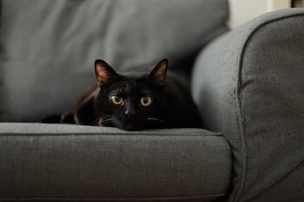 Черный кот смотрит в камеру сидя на диване