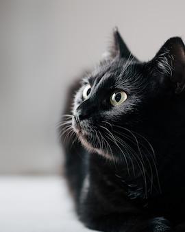 Черная кошка, глядя вверх селективный фокус
