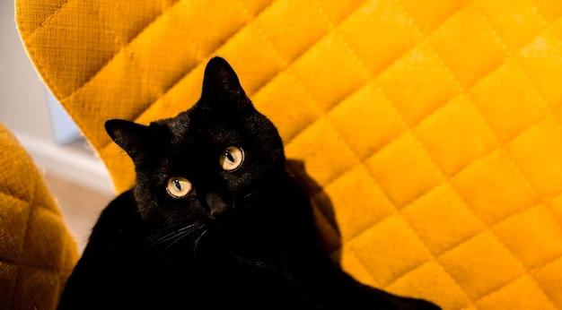 黄色い椅子に横たわっている黒猫上水平図コピースペース