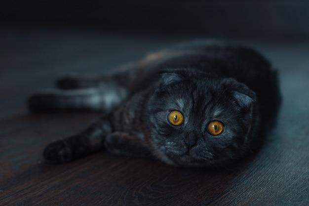 黒い背景に黒い猫