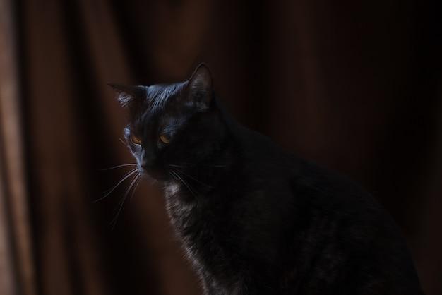 茶色の背景のクローズアップの黒い猫