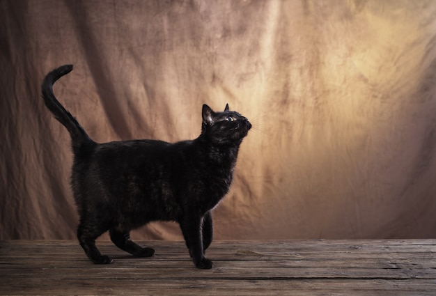 Черная кошка на коричневом фоне