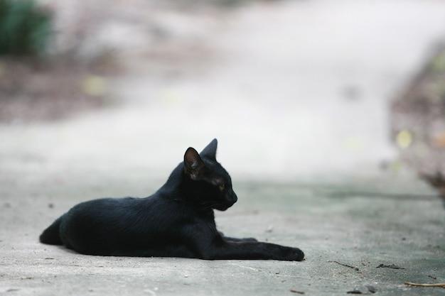 Black cat portrait on the street
