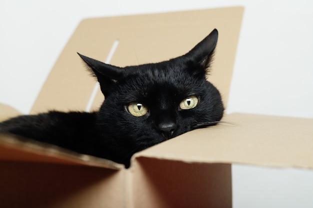 Черная кошка показывает лицо внутри картонной коробки