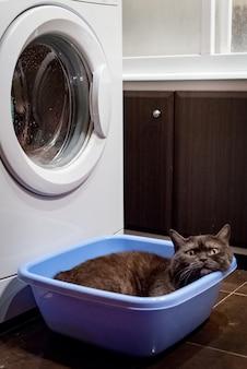 Black cat sits in a basin near the washing machine