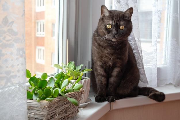 Черная кошка сидит на подоконнике возле комнатных растений в горшках