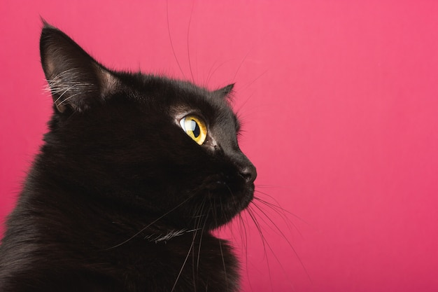 A black cat sits in profile, looks around in shock