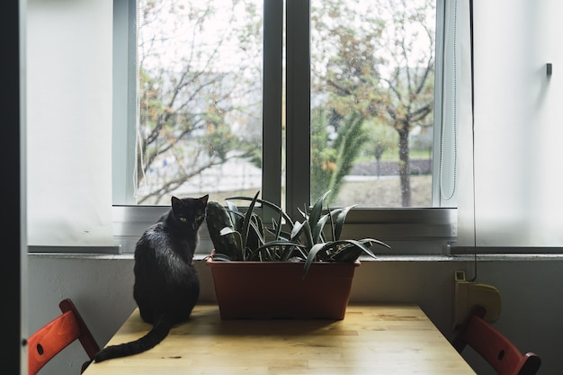 Black cat sitting next to a house plant by the window during daytime